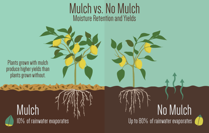 How mulching works