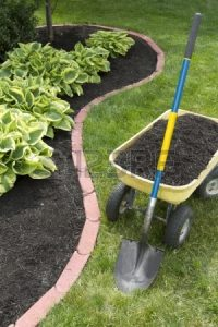 13992883-mulch-bed-around-the-house-and-wheelbarrel-along-with-a-showel