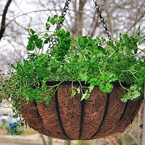 herbs-wire-basket
